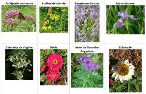 Noms et photos des différents types de fleurs